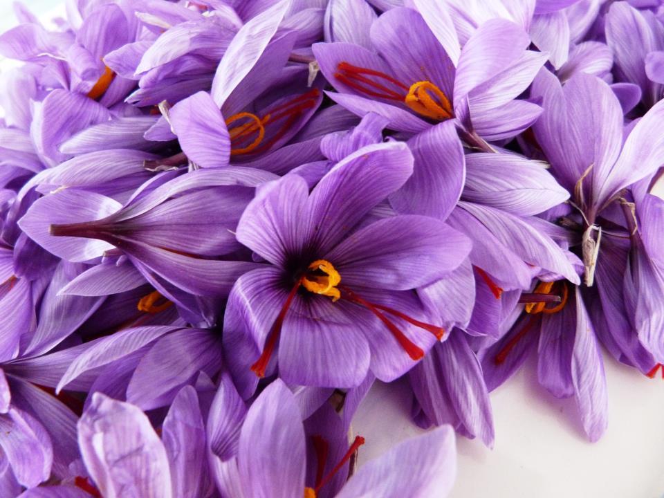 Fiesta de la rosa del azafr n 2013 fiestas ruralgia blog - Como cultivar azafran ...