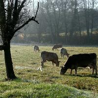 gebrada i vaques 5