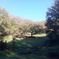 Casa Rural Ginkgos Otonno2